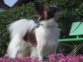 2005年 4月 芝桜 17