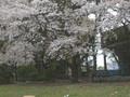 2005年 4月 総合公園 8