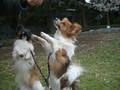 2005年 4月 総合公園 ...