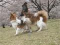 2005年 4月 総合公園 19