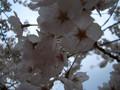 2005年 4月 総合公園 22